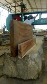 Find best timber supplies on Fordaq - MADERAS y MADERAS SA - Boards, slats, Saman Slabs.
