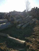 null - 30+ cm Oak Saw Logs from Romania