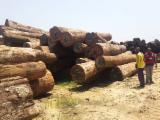 Forêts Et Grumes Afrique - Tali