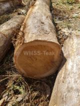 Forêts Et Grumes Amérique Du Nord - Vend Grumes De Sciage Teak FSC