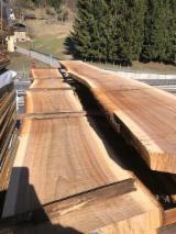 Hardwood  Unedged Timber - Flitches - Boules Kiln Dry KD - European Elm Boules, 25-100 mm
