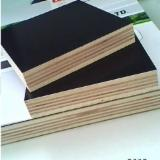 Black Color Phenolic Film Faced Plywood 12mm - 18mm Thickness