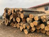 Forest and Logs - Construction Round Beams, Beech