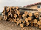 Vender Vigas Redondas De Construção Faia Roménia