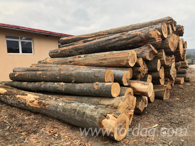 Beech Construction Round Beams, 30+ cm