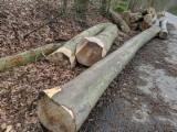 Beech Peeling Logs, AB Grade, 40+ cm