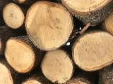 Saw logs oak / EU