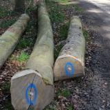 Hardhoutstammen Te Koop - Registreer En Contacteer Bedrijven - Zaagstammen, Esdoorn Sycamore