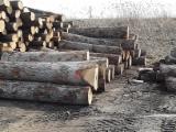 Forêts Et Grumes Amérique Du Nord - Vend Grumes De Sciage Noyer Noir, Chêne Rouge, Chêne Blanc Ohio And Michigan