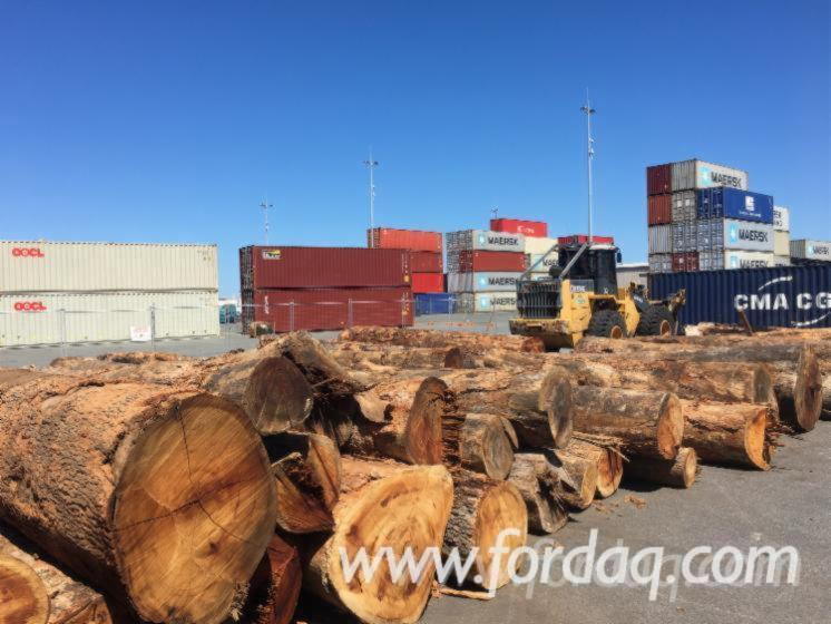 Western-Australian-Native-Marri-Logs