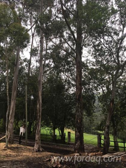 Vender Passadores De Madeira Eucalipto Termo Tratado 28 mm Andean Mountains Equador