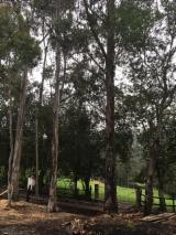 Klepki, Kołki, Eukaliptus, Poddane Obróbce Termicznej