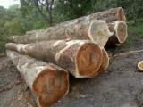 Wälder Und Rundholz - Schnittholzstämme, Tali