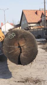 Find best timber supplies on Fordaq - SALE ! Bog Oak veneer Log quality 1.89 m3 - Bog Oak, Bog Wood, Mooreiche, Morta, Abonos 670 cm lenght 60 cm width