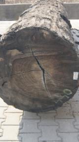 Find best timber supplies on Fordaq - SALE ! Bog Oak veneer Log quality 1.76 m3 - Bog Oak, Bog Wood, Mooreiche, Morta, Abonos 500 cm lenght 67 cm width