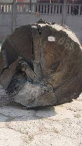 null - SALE ! Bog Oak veneer Log quality 2.50 m3 - Bog Oak, Bog Wood, Mooreiche, Morta, Abonos 510 cm lenght 79 cm width