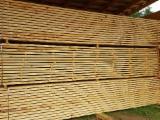 Vender Pinus - Sequóia Vermelha 50; 63 mm