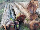 Finden Sie Holzlieferanten auf Fordaq - Eurowood Services eurl - Schnittholzstämme, Walnuss