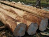 Bois sur Pied à vendre - Vend Eucalyptus Atlántico Colombie