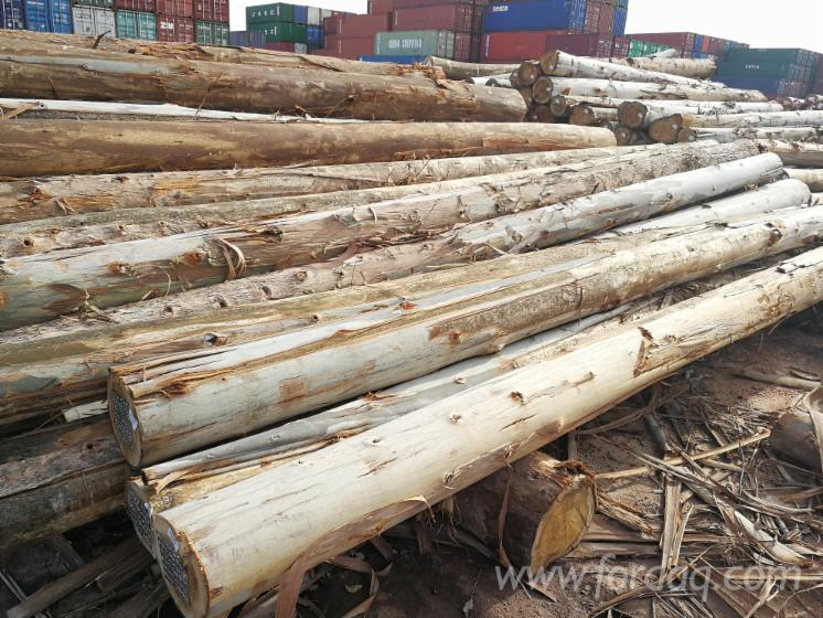 Looking for Rosegum Eucalyptus Grandis Logs