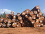 Basralocus Saw Logs, A/B, diameter 50+ cm