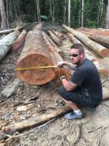 Apazeiro (Wallaba) Logs from Suriname, 50+ cm diameter