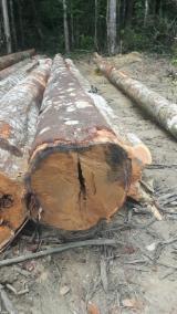Schnittholzstämme
