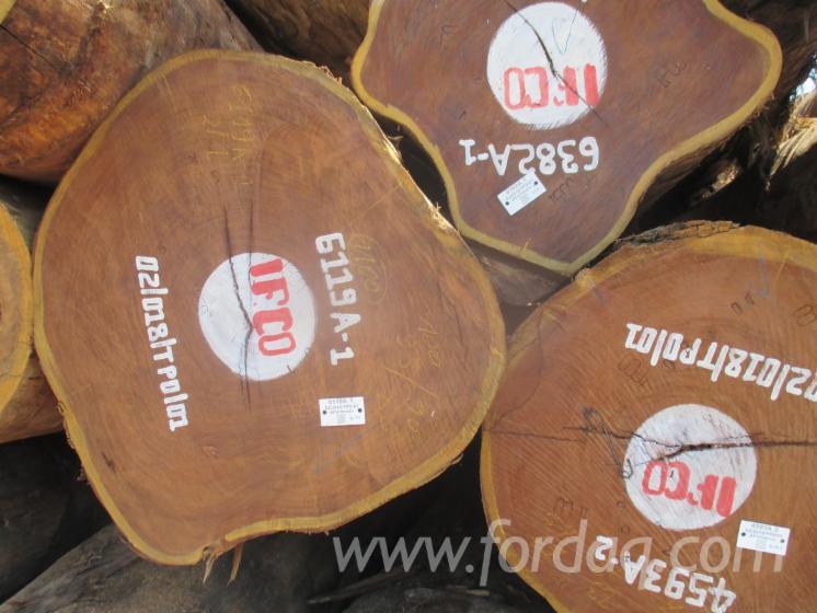 Vend-Grumes-De-Sciage-Afrormosia-R%C3%A9p-D%C3%A9m-Congo