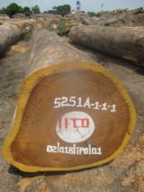 Iroko Round Logs, 60+ cm