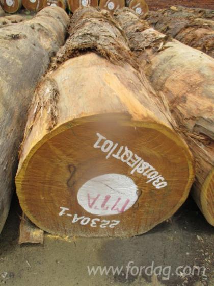 Bilinga-Round-Logs