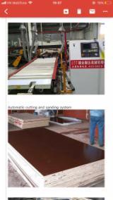 Znajdz najlepszych dostawców drewna na Fordaq - Galahome Furniture Co.,Ltd - Sklejka Z Filmem (Czarnym)