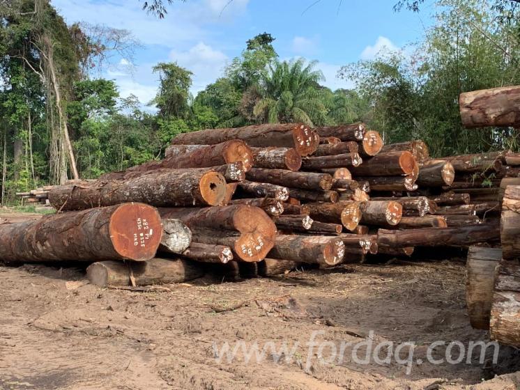 Vender Troncos Serrados Angelim, Basralocus , Ipe Suriname South America