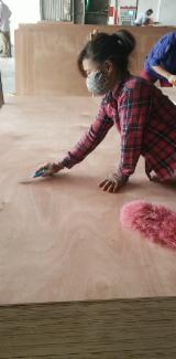 Znajdz najlepszych dostawców drewna na Fordaq - Galahome Furniture Co.,Ltd - Sklejka Komercyjna