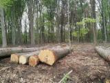 Red Oak Saw Logs, 30+ cm