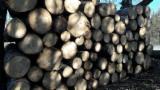 Aspen Saw Logs, 18+ cm