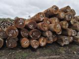 Greenheart Logs, Guyana Origin, 35-90+ cm diameter