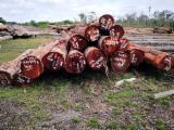 Mora/Nato/Eastern Mahogany Saw Logs, 6-11 m