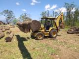Balsamo/Santos Mahogany/Cabreuva Saw Logs, 30-100 cm