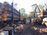 Softwood Logs Suppliers and Buyers - Southern Yellow Pine Saw Logs, 25+ cm