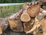 Hardwood  Logs White Oak - White Oak saw Logs