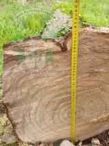 Finden Sie Holzlieferanten auf Fordaq - MUNICH RESIDENCE SRL - Schälfurnierstämme, Paulownia