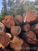 Find best timber supplies on Fordaq - Practerra - Red Oak Peeling Logs, 2SC & 3/4SC, 10