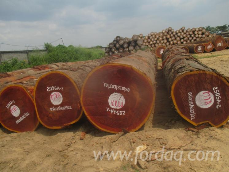 Fresh-Sipo-Saw-Logs--A-B