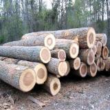 European beech logs