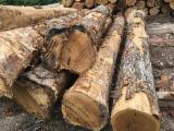 Vend Grumes De Sciage Chêne Blanc North Carolina