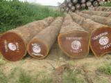 Vender Troncos Serrados Tali República Democrática do Congo (Zaire)