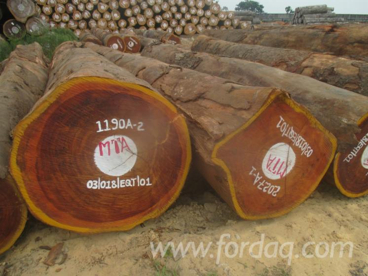 Fresh Cut Tali Saw Logs, 60+ cm