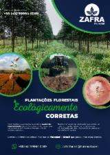 Servizi Forestali - Impianto, Paraguay