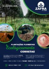 Serviços Florestais - Entre Na Fordaq E Contate Empresas Especializadas - Plantio, Paraguai