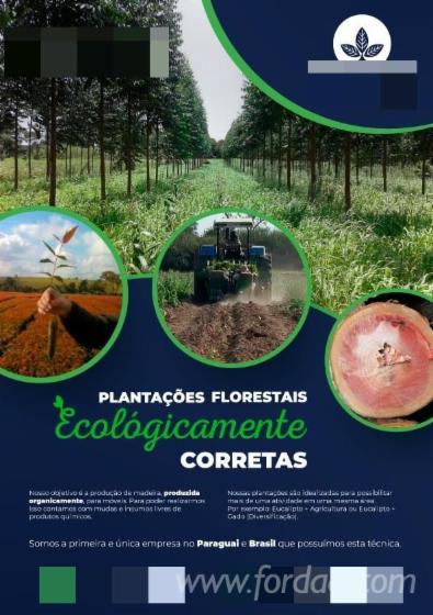Plantio